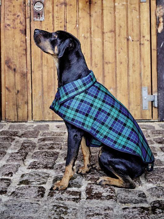 Попонка з відкладним коміром для собаки