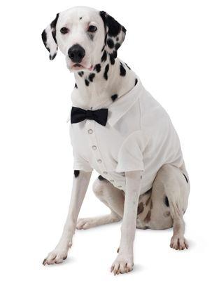 Попона-«сорочка» для собаки