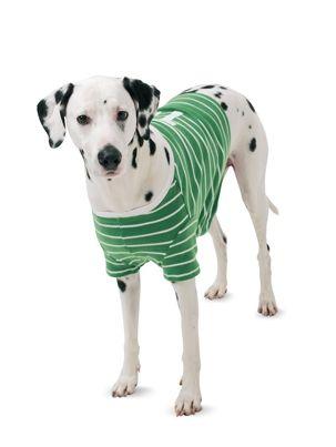 Попона в спортивному стилі для собаки