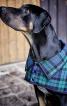 Попонка з відкладним коміром для собаки - фото 4