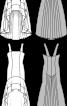 Сукня-бюстьє з пишною спідницею зі шлейфом - фото 3